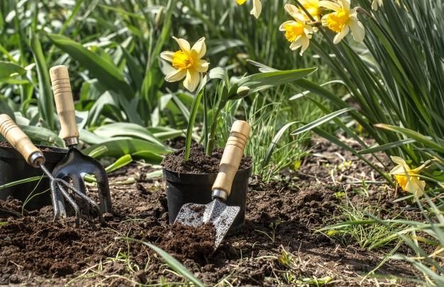 Planting flower ganrden
