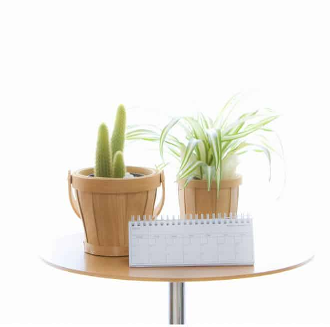 calendar leaning against two indoor house plants on a wooden table